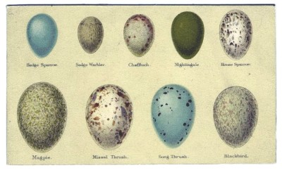Animal Bird Eggs 2